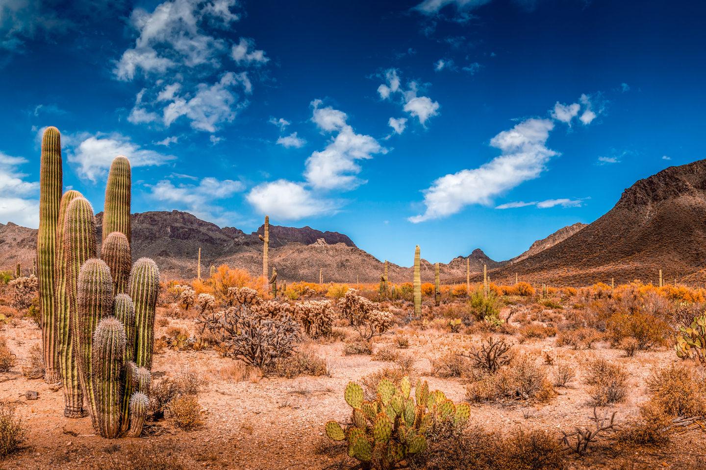 Mesa Motorcycle Rentals & Tours